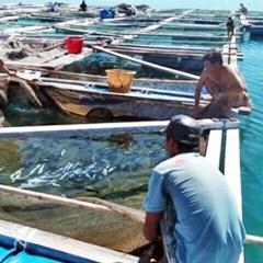 Thẩm quyền cấp phép nuôi trồng thủy sản trên biển