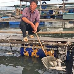 Ác mộng của người nuôi cá ở Bà Rịa - Vũng Tàu