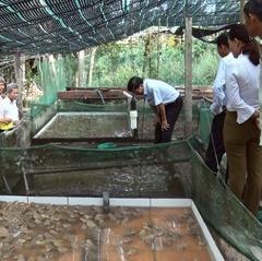 Quảng Nam: Triển vọng mô hình nuôi ếch thương phẩm