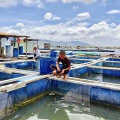 Vũng Tàu: Yêu cầu lồng bè nuôi thủy sản di dời vào vùng quy hoạch