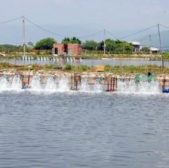Bình Định: Chủ động bảo vệ thủy sản mùa nắng nóng