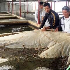 Lộc Hà: Sản lượng thủy sản đạt gần 144 tỷ đồng