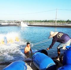 Một số biện pháp phòng, trị bệnh thủy sản trong mùa mưa
