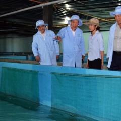 Dự án đầu tiên nuôi thương phẩm tôm hùm trong bể trên bờ