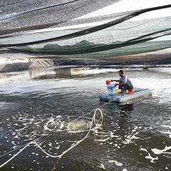 Nông dân Nghệ An chống nóng cho tôm