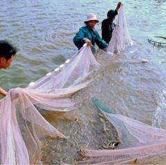 Ninh Bình: Đẩy mạnh phát triển thủy sản ở Yên Đồng