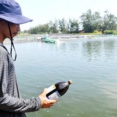 Giá tôm nguyên liệu tại Quảng Nam giảm mạnh