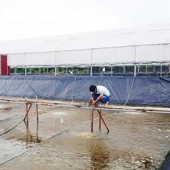 Quảng Ninh: Thiếu lao động kỹ thuật ngành nuôi trồng thủy sản