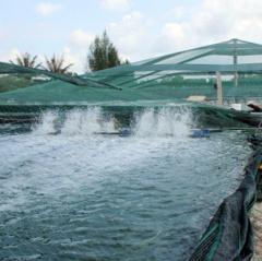 Thái Thượng: Bảo đảm an toàn nuôi trồng thủy sản mùa mưa bão
