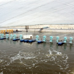 Thái Bình: Hiệu quả nuôi tôm chưa tương xứng với tiềm năng