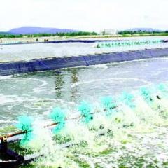 Bảo vệ nuôi trồng thủy sản mùa nắng nóng