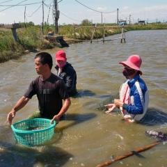 Thừa Thiên Huế: Nắng nóng, tôm cá chết hàng loạt