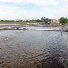 Biến bãi lầy ven sông thành vùng nuôi trồng thủy sản hiệu quả