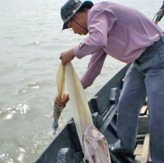Trà Vinh: Nhiều mẫu nước nuôi tôm có mật độ vi khuẩn Vibrio cao