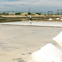 Toàn tỉnh Ninh Thuận có 2.500 ha sản xuất muối