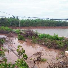 Thận trọng sử dụng điện trong nuôi tôm mùa mưa bão