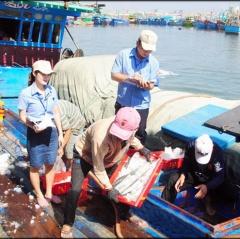 Sẽ kiểm soát, xử lý quyết liệt hơn việc truy xuất nguồn gốc thủy sản