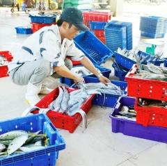 Vì sao thủy sản thu mua vẫn chưa truy xuất nguồn gốc?