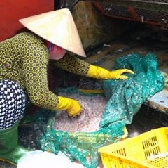 Vừa mừng vừa lo khi vảy cá hút hàng