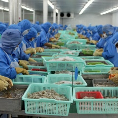 Tháng 6 xuất khẩu tôm Việt sang Trung Quốc tăng trở lại
