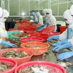 Cơ hội đang rõ ràng hơn với ngành tôm