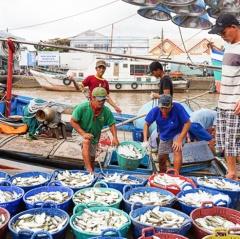 Nghề cá Sóc Trăng: Thay đổi để phát triển bền vững và phù hợp thị trường