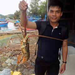 Trung Quốc siết tiểu ngạch: Hàng trăm tấn tôm hùm ứ đọng