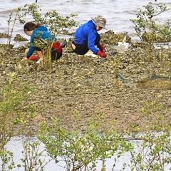 Mô hình nuôi thủy sản sinh thái tại khu vực Đầm Nại