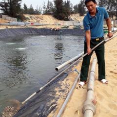 Nông dân Quảng Bình thu nhập hàng tỷ đồng nhờ nuôi ốc hương