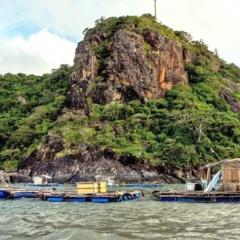 Thủy sản Cà Mau: Mở hướng ra biển