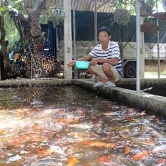 Thu nhập hàng trăm triệu đồng nhờ nuôi cá Koi