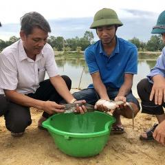 Người nuôi cá leo thương phẩm đầu tiên ở Vĩnh Linh
