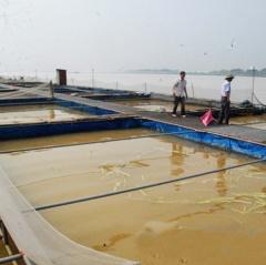 Bạc Ninh: Tăng cường quản lý, hướng dẫn nuôi cá lồng trên sông