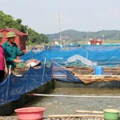 Bắc Ninh: Hướng đi bền vững cho nghề nuôi cá lồng