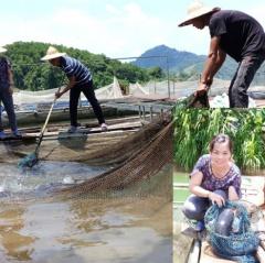 Chiêm Hóa phát triển nghề cá lồng trên sông Gâm