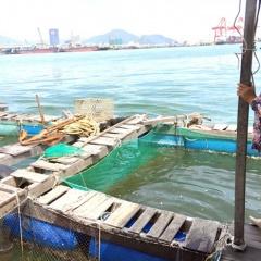 Người nuôi thủy sản Bình Định khốn đốn vì hạn hán
