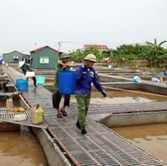 Chủ động các biện pháp bảo vệ an toàn cá lồng trong mùa mưa bão