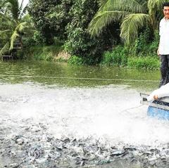 Nuôi thủy sản theo tiêu chuẩn, đáp ứng yêu cầu thị trường