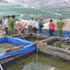 Long An: Phát hiện nơi nuôi tôm hùm nước ngọt, tôm càng đỏ quy mô lớn