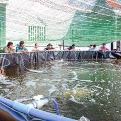 Cà Mau: Diện tích nuôi tôm công nghiệp đạt 9.473ha