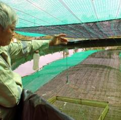 Nuôi thủy sản nước lợ Đồng Nai: Cần tính toán lâu dài