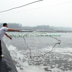 Hải Châu phát triển thủy sản thành ngành kinh tế mũi nhọn