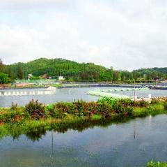 Thanh Hóa: Cơ sở hạ tầng chưa đáp ứng yêu cầu nuôi trồng thủy sản