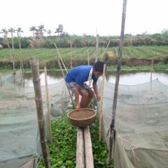 Bảo vệ các đối tượng thủy sản nuôi trước cơn bão số 3