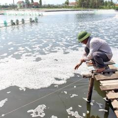 Nông dân Nghệ An dùng thảo dược phòng bệnh cho tôm