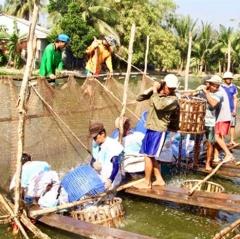 Chuẩn hóa cá tra