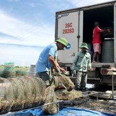 Vướng quy định: Nhiều lô thủy sản xuất sang Trung Quốc bị tồn đọng