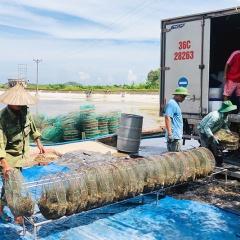 Thay đổi tư duy các hộ nuôi tôm ở Móng Cái