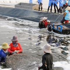 Phú Yên: Nhân rộng các mô hình thủy sản tiên tiến