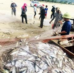 Ngư dân Hà Tĩnh trúng đậm cá bạc má